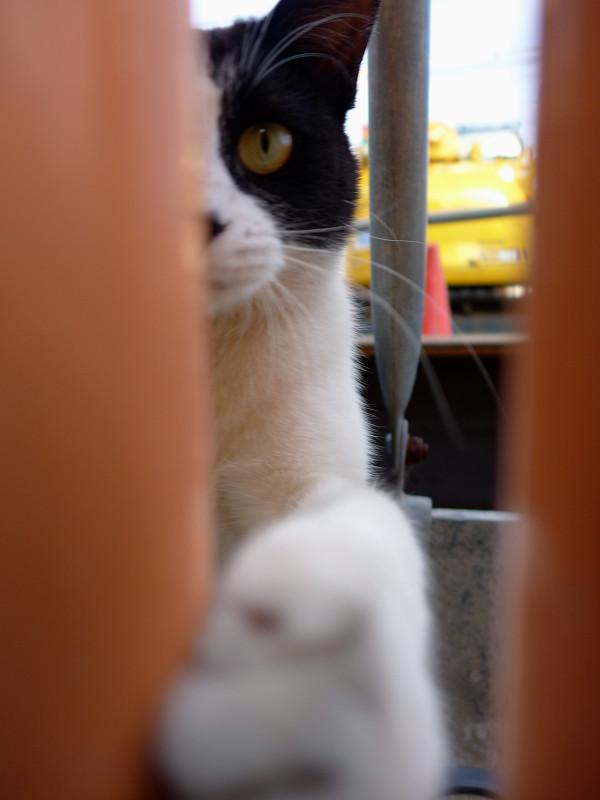 隙間に寄って来た黒白猫3