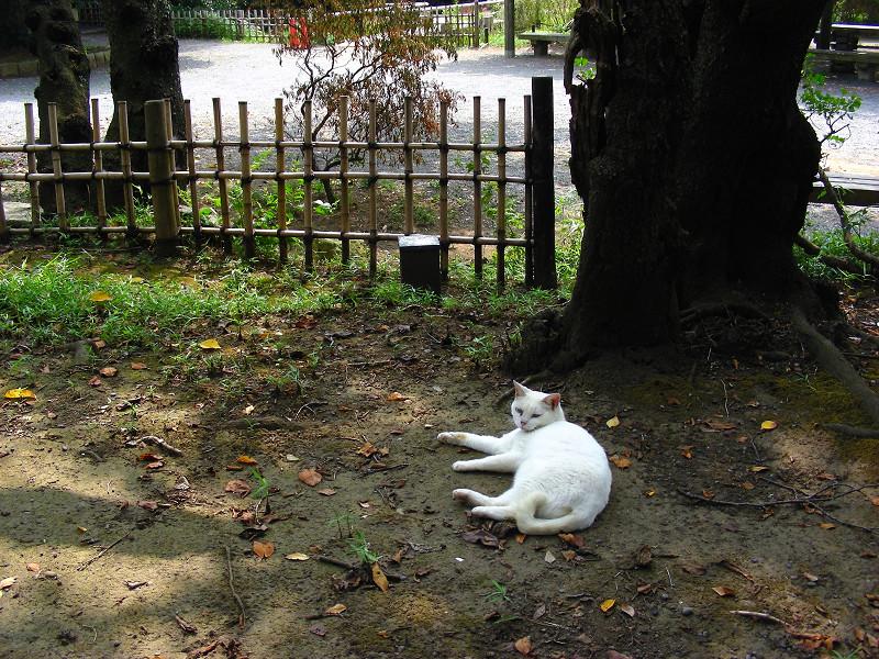 木の根元の白猫1