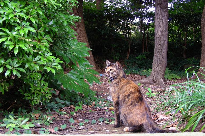 森林とサビ柄猫1