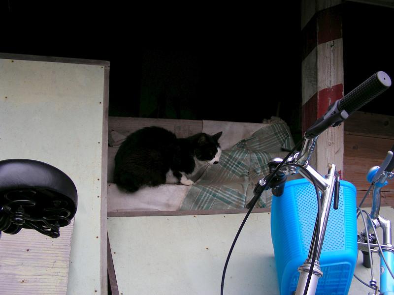 棚と黒白猫1