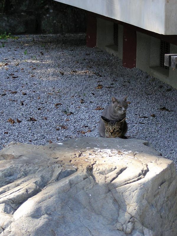 玉砂利と母子猫1