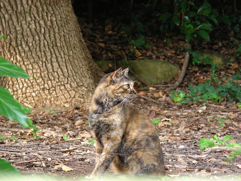 森林とサビ柄猫2