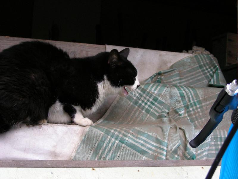 棚と黒白猫2
