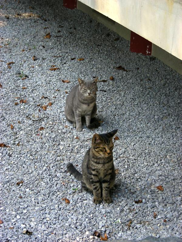 玉砂利と母子猫2