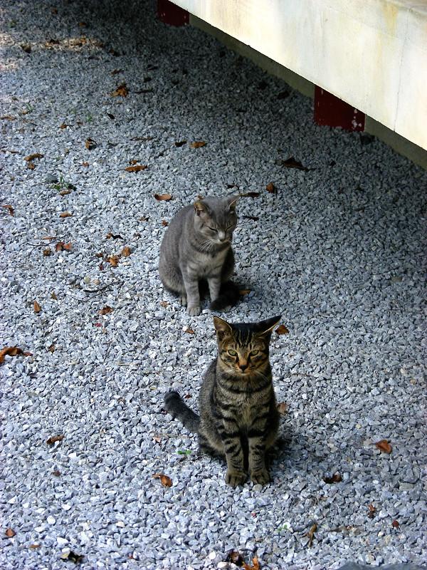 玉砂利と母子猫3