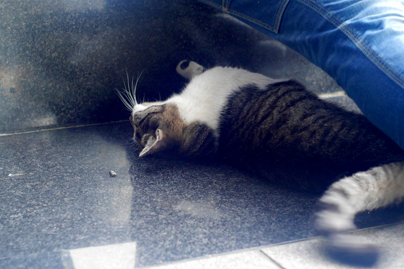 御影石で転がってるキジ白猫1