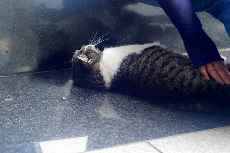 御影石で転がってるキジ白猫3