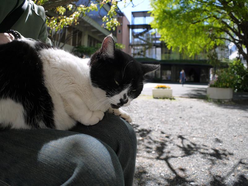 膝に乗ってくれた白黒猫2