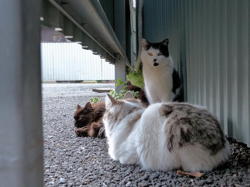 集まってる猫たち1