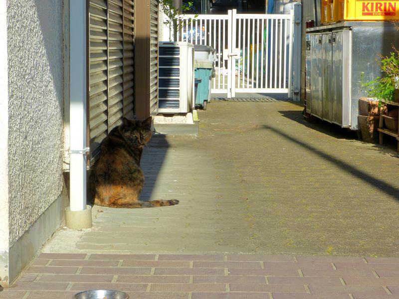 民家の通路のサビ柄猫1