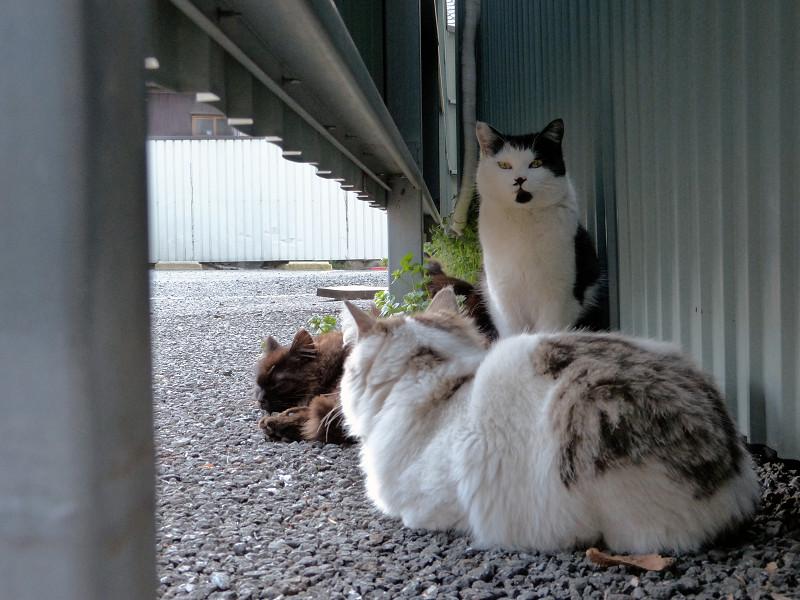 集まってる猫たち2