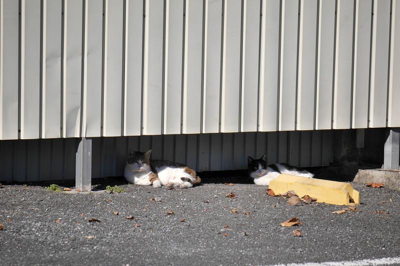 壁と猫たち2