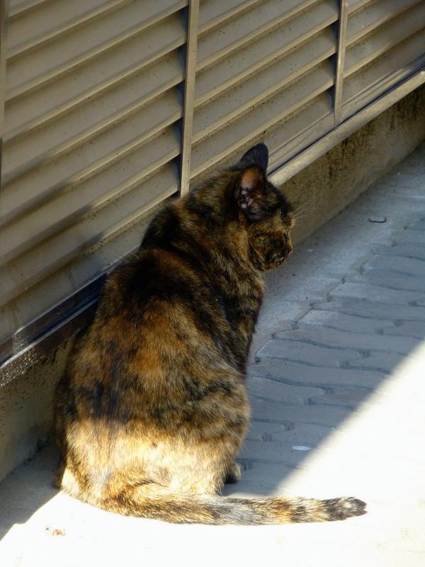 民家の通路のサビ柄猫3