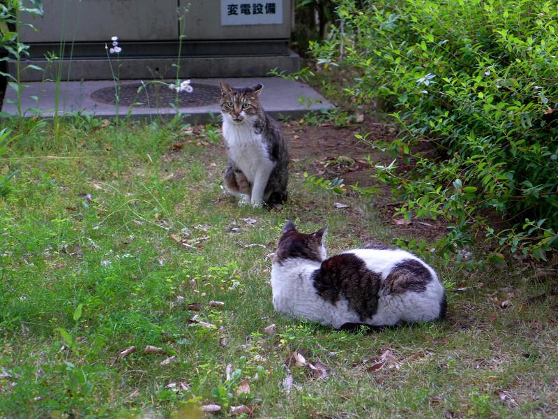植え込みの中の猫たち1