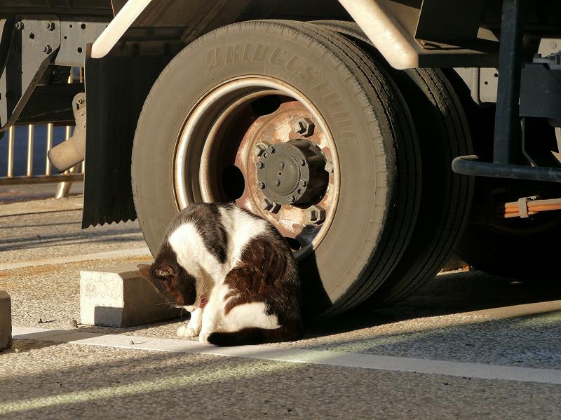 トラックのタイヤと黒白猫1