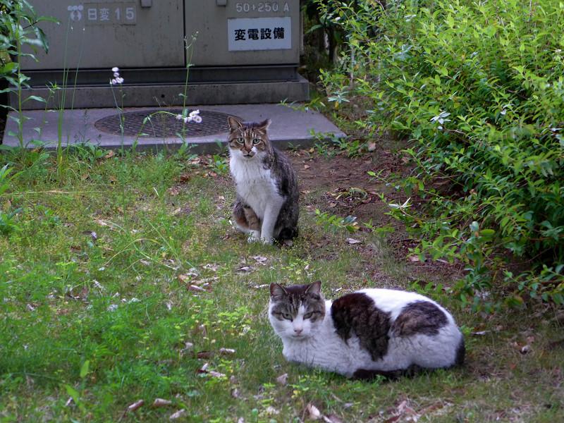 植え込みの中の猫たち2