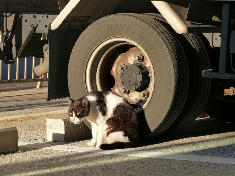 トラックのタイヤと黒白猫2