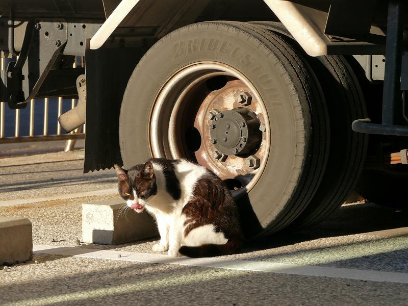 トラックのタイヤと黒白猫3