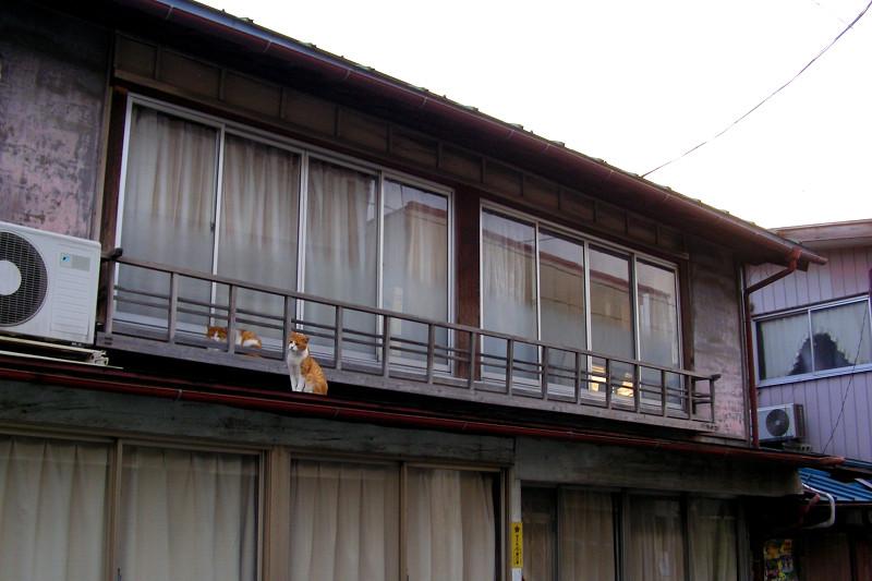 2階建て木造家屋と茶トラ猫1