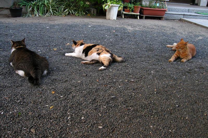 玉砂利に腹ばう猫3匹1