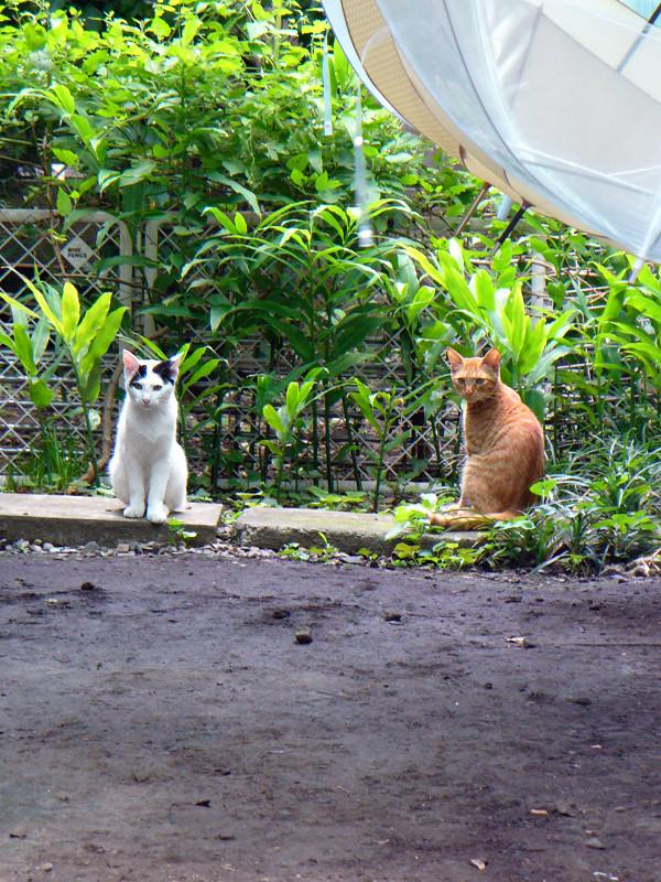 土庭の猫2匹1