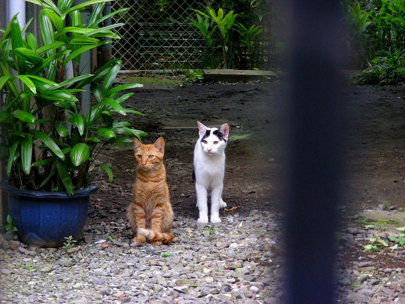 土庭の猫2匹2