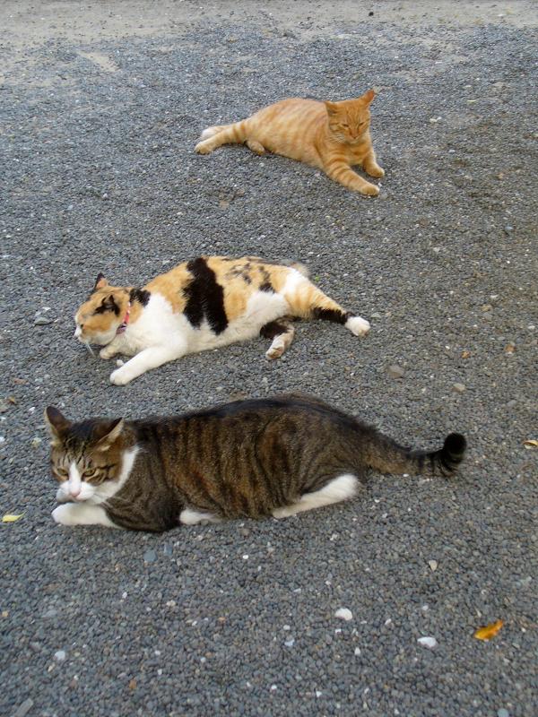 玉砂利に腹ばう猫3匹2
