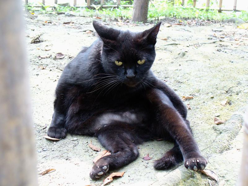 土の上で毛づくろいする黒猫2