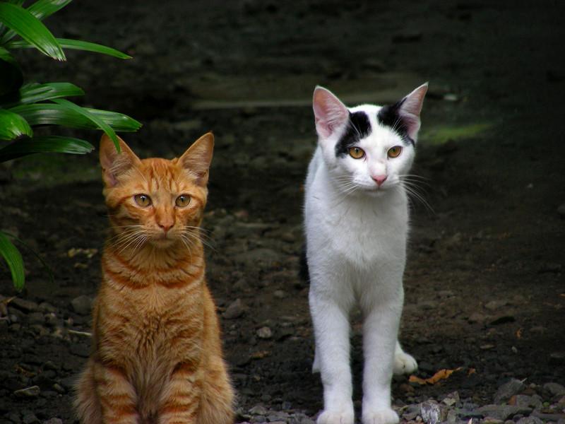 土庭の猫2匹3