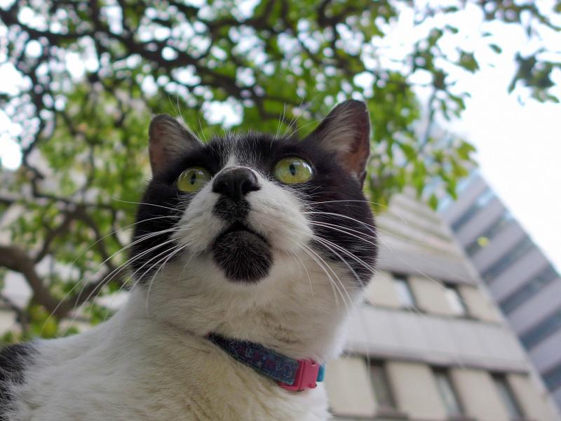 チャーミング柄の白黒猫1