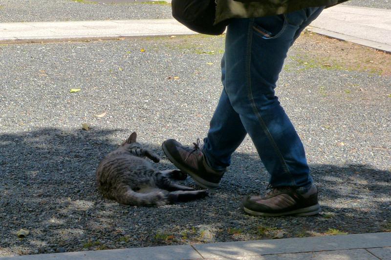 踏まれそうなサバトラ猫1