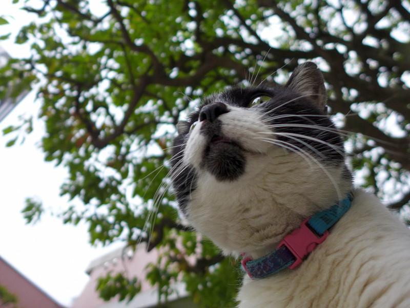 チャーミング柄の白黒猫2