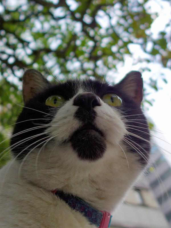 チャーミング柄の白黒猫3