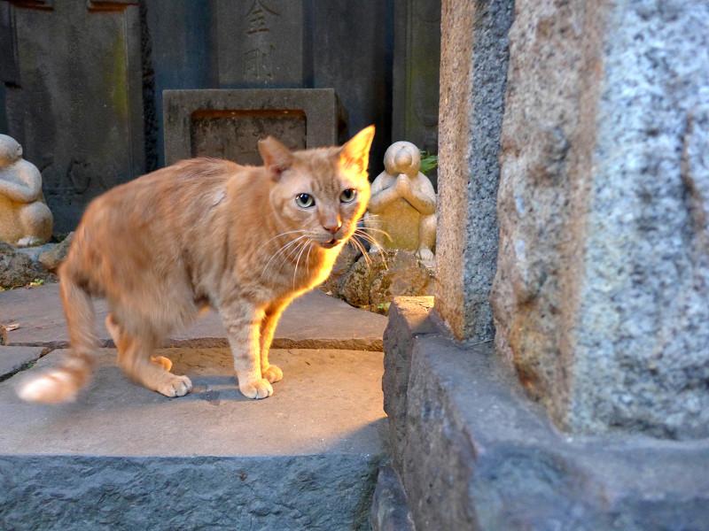 ライトアップと茶トラ猫1