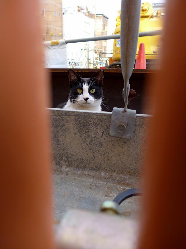 隙間から離れてる黒白猫2