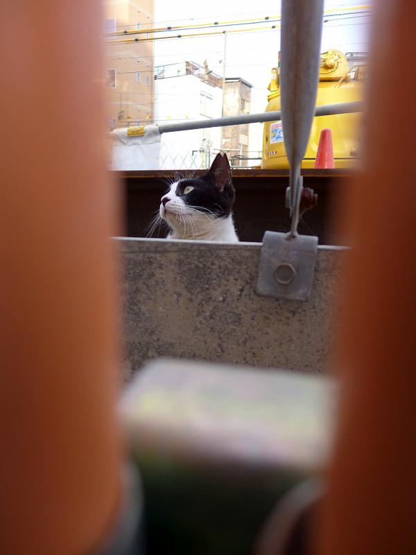 隙間から離れてる黒白猫3