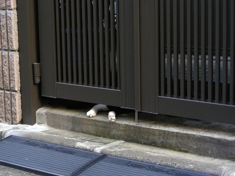 門扉から出てる猫の足