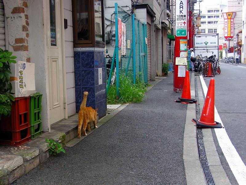 歓楽街の茶白猫1