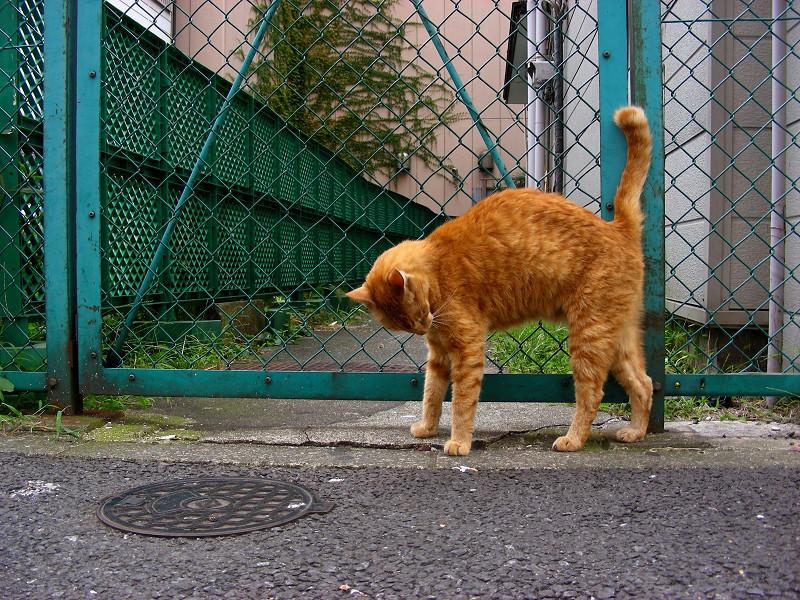 歓楽街の茶白猫2