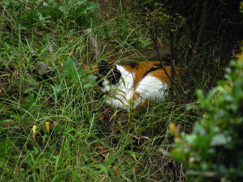 植え込みスペースの三毛猫2