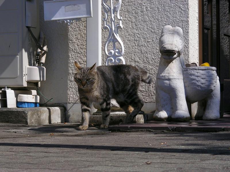 歩いて出てきたキジトラ猫3