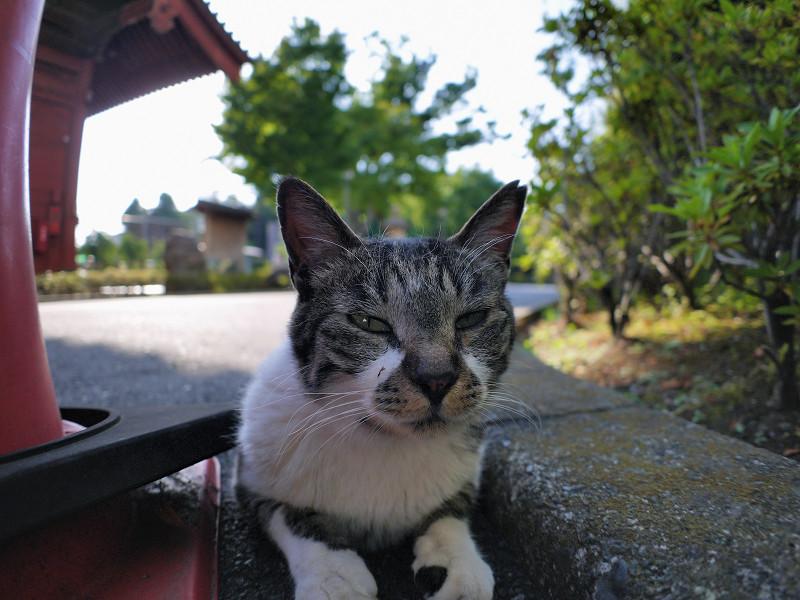 狭い場所のキジ白猫1