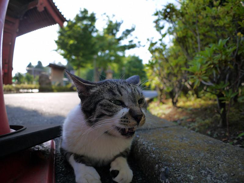 狭い場所のキジ白猫2