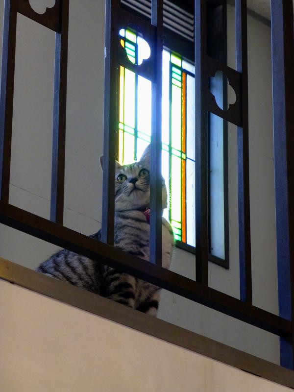 ステンドグラス風とサバトラ猫1