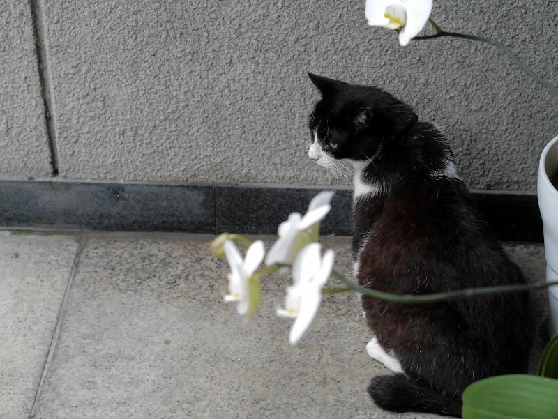 蘭と黒白猫1