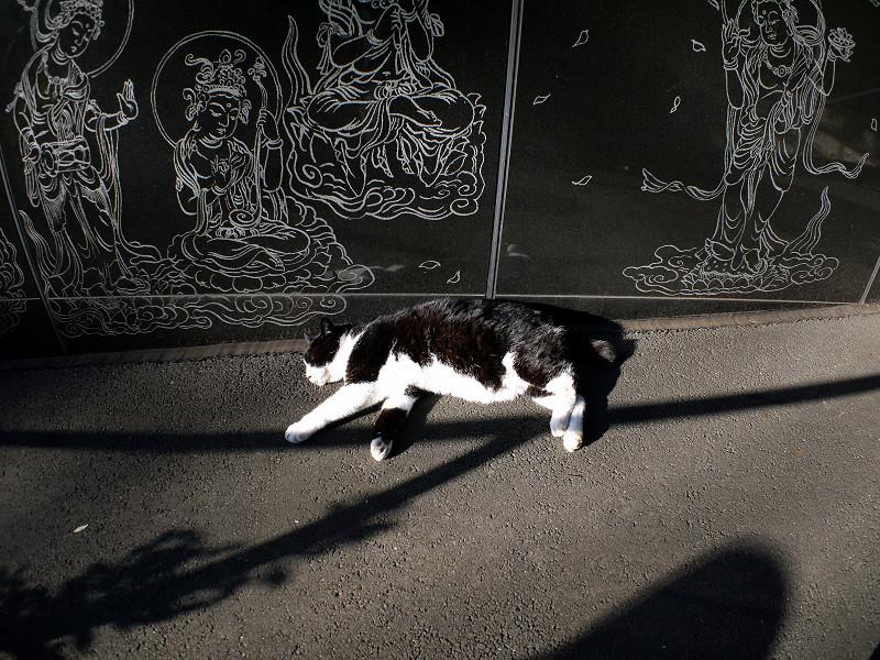 寝てしまった黒白猫1