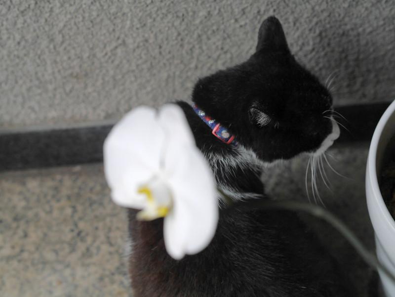 蘭と黒白猫2