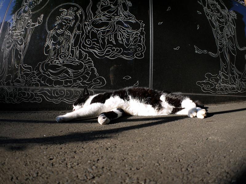 寝てしまった黒白猫2