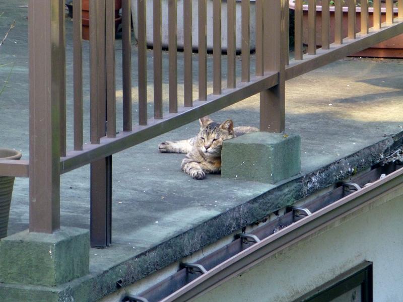 物干しベランダの猫1