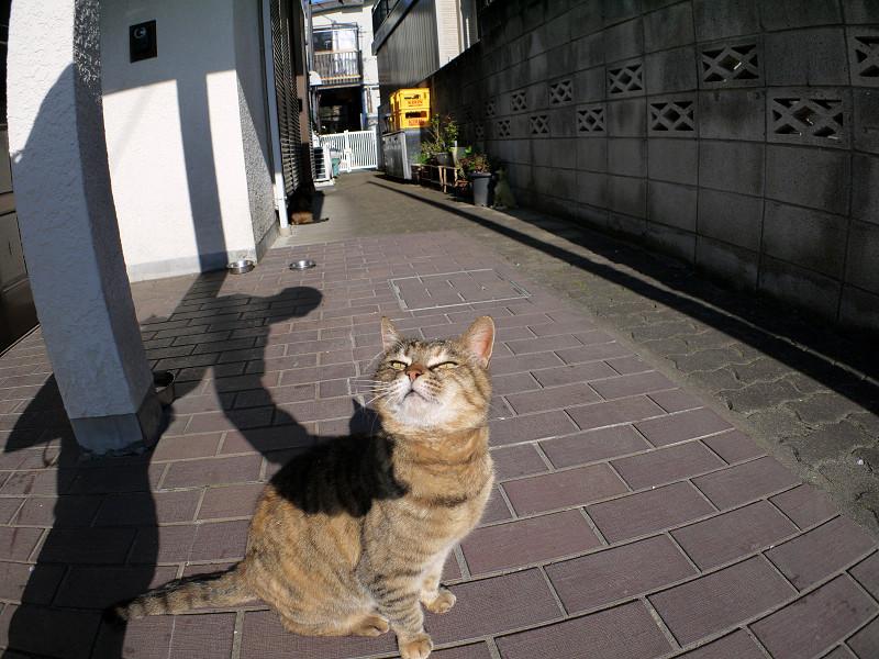 夕方のサビ柄猫1